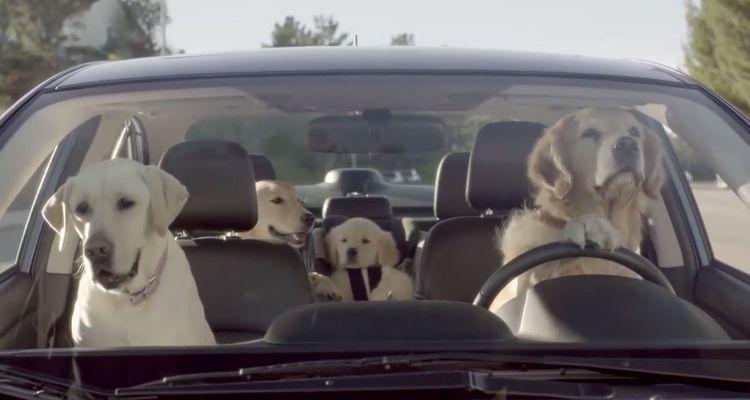 ¿Cómo puedo y tengo que viajar con mi perro en coche?